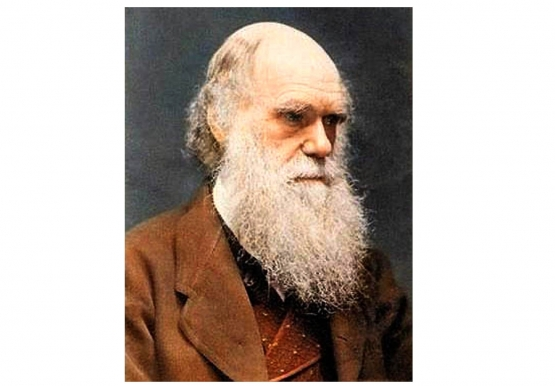 darwin eller intelligent design