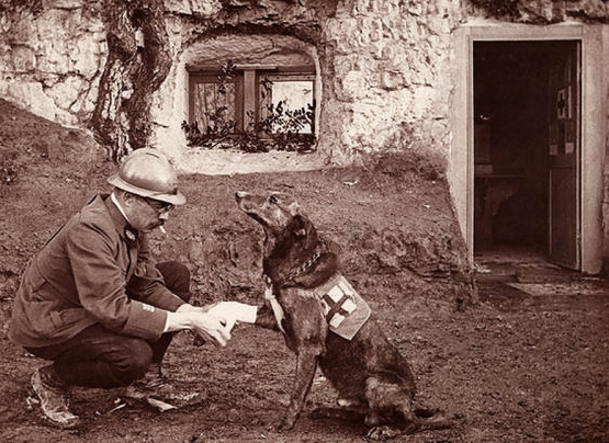 The Red Cross Dogs <BR> <br />(Literary Digest, 1917)