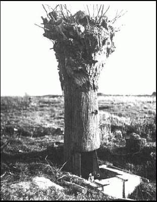 The Steel Tree Stump, Part I <br />(Popular Mechanics, 1917)