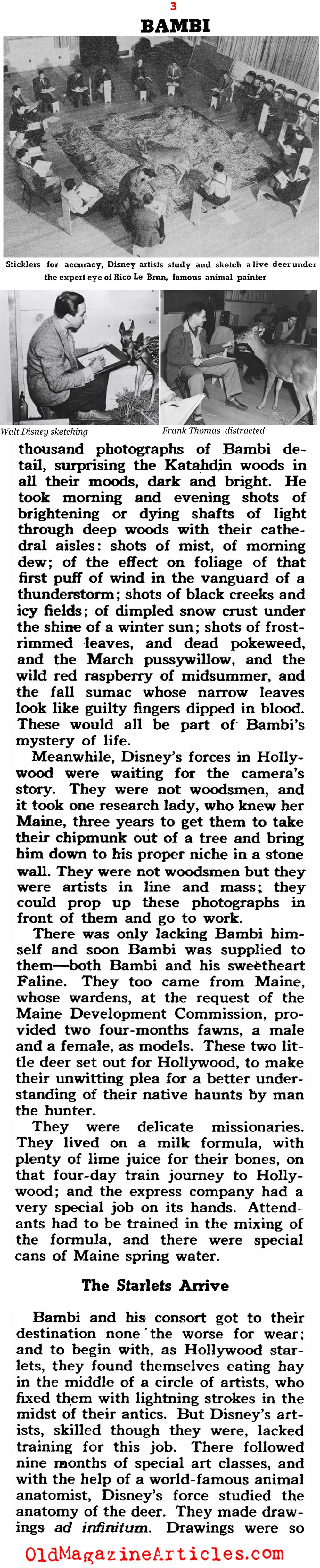 Walt Disney's Artists and the Making of 'Bambi' (Collier's Magazine, 1942)