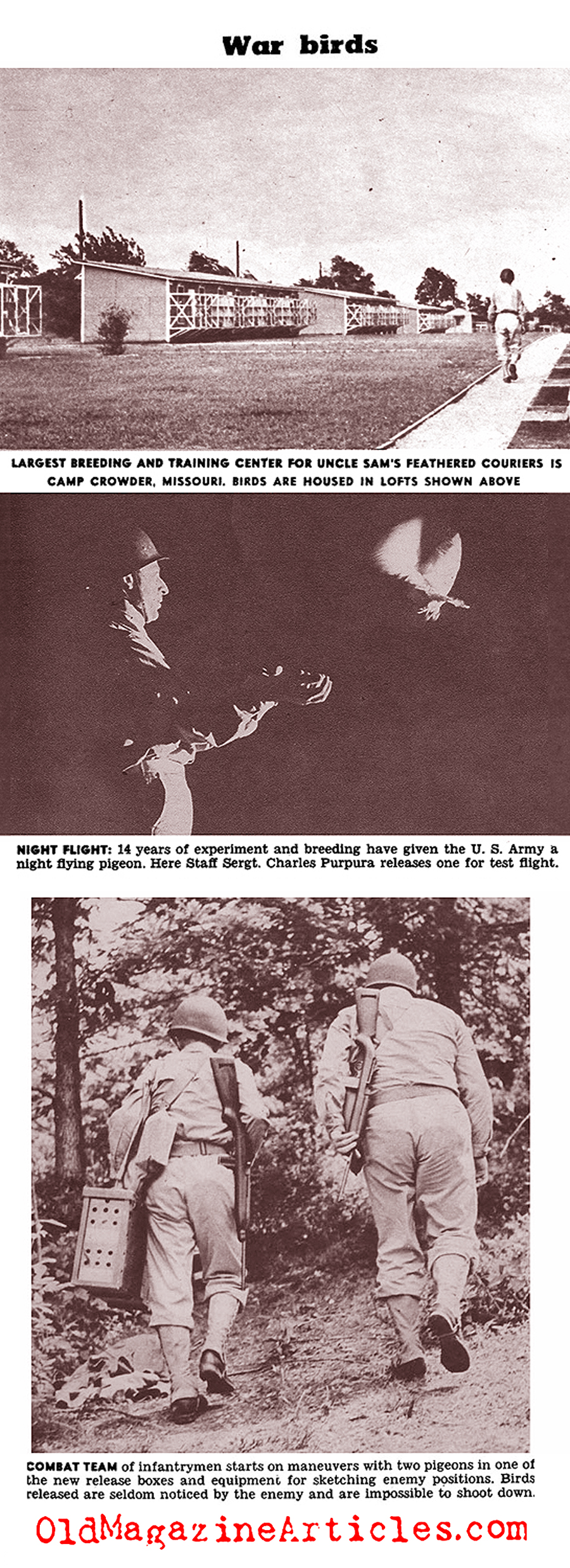 U.S. Army Carrier Pigeons of World War II (Click Magazine, 1943)